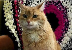000 Эстнский кот Людвиг